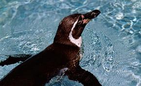 penguin-resized